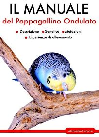 Motivated Casetta Nido Uccellini Di Legno Giardino Volatili Passeri Migratori Other Bird Supplies Bird Supplies