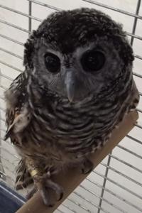 Other Bird Supplies Motivated Casetta Nido Uccellini Di Legno Giardino Volatili Passeri Migratori